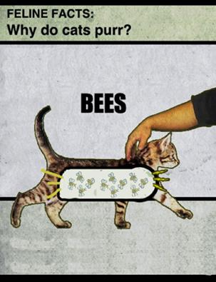 Warum Katzen schnurren